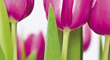Gartenmesse 04.-06.04.14 